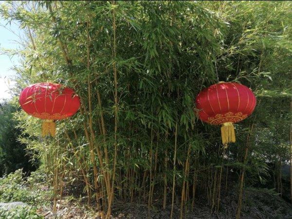China Glückslampion Rot Garten Laterne aus Stoff